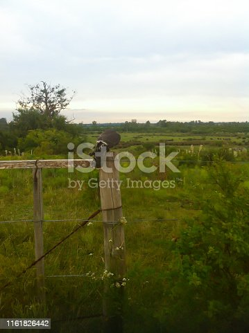 Falconry in the field of Uruguay