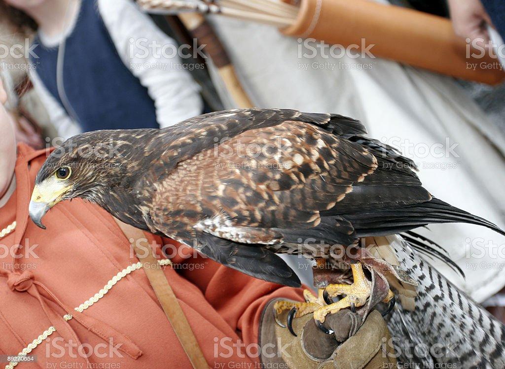Falconer stock photo