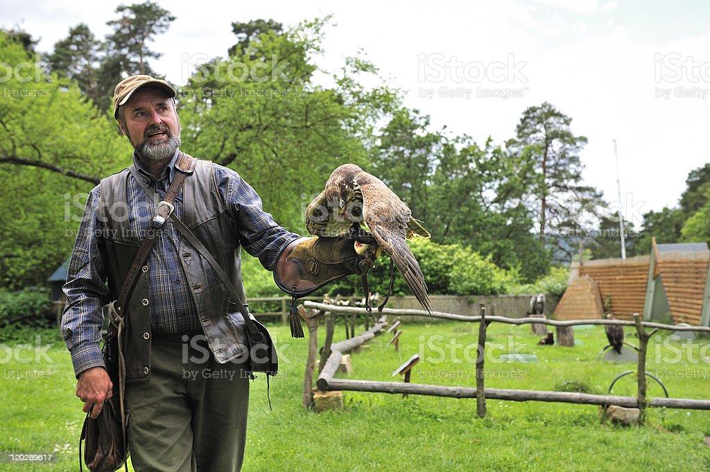 Falconer with Falcon falco cherrug. royalty-free stock photo