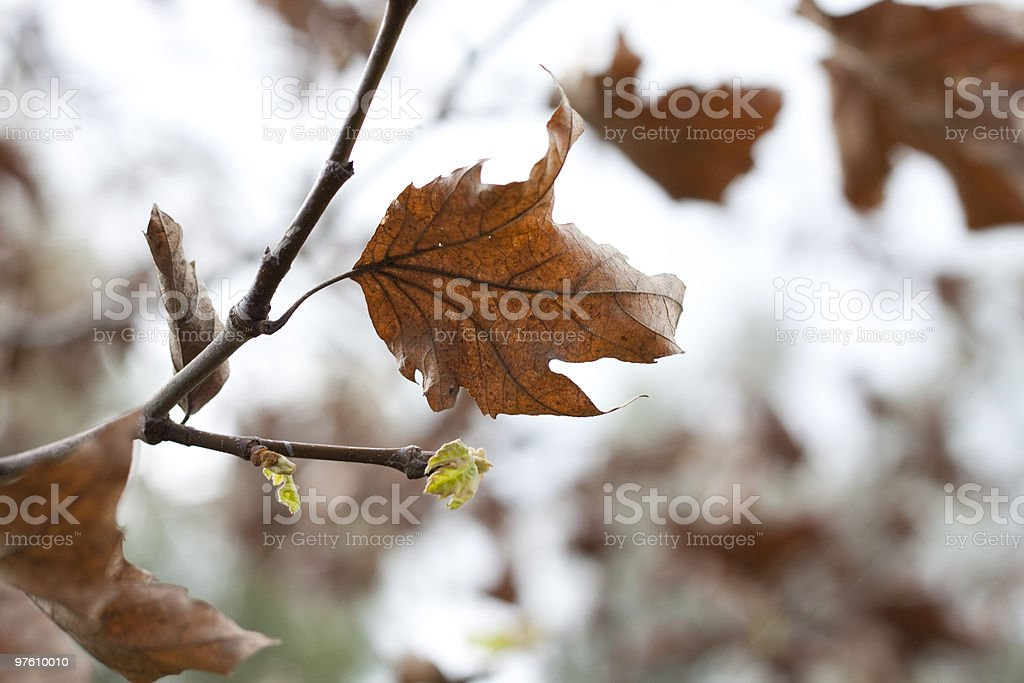 fall and spring royalty-free stock photo