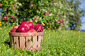 Autumn view from the farm's apple harvest.