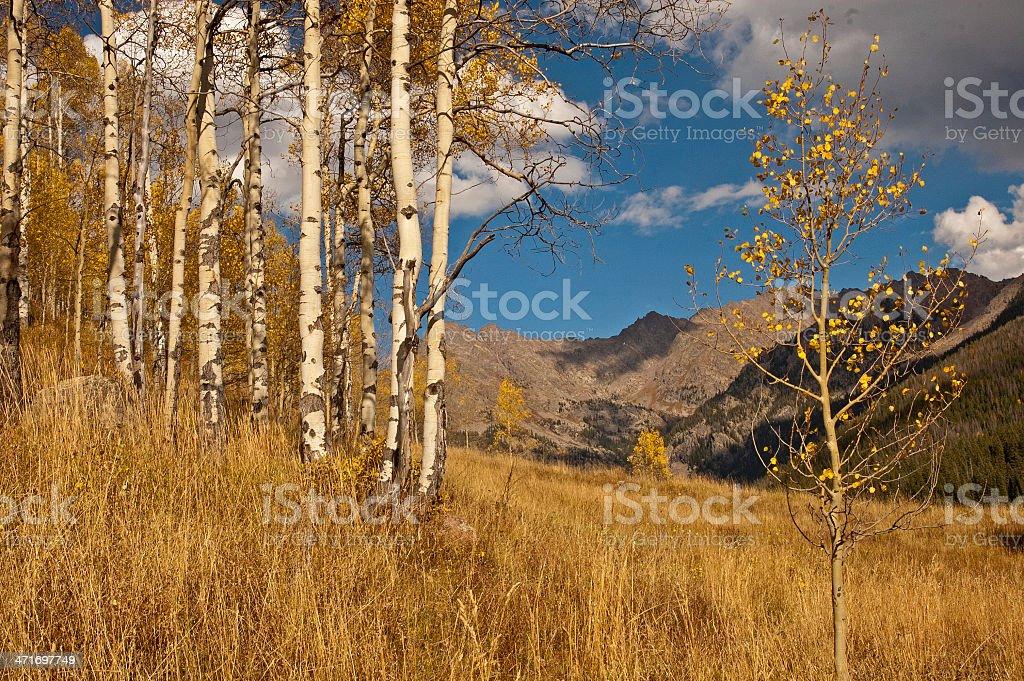 Fall Aspen along the Piney Lake Trail stock photo