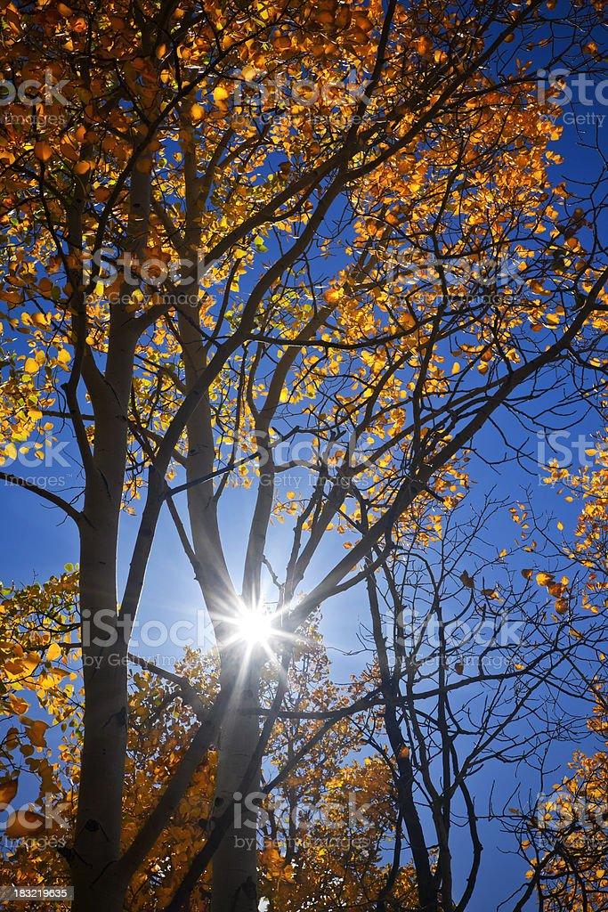 Fall Aspen Color in Colorado stock photo