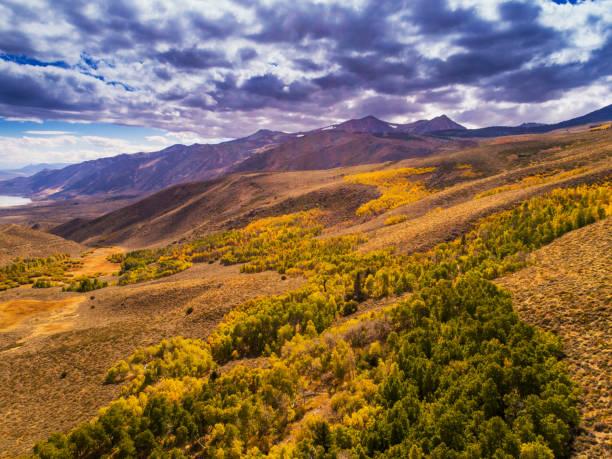 Fallen Sie Aspen Groves auf Sierra Nevada Mountains. – Foto