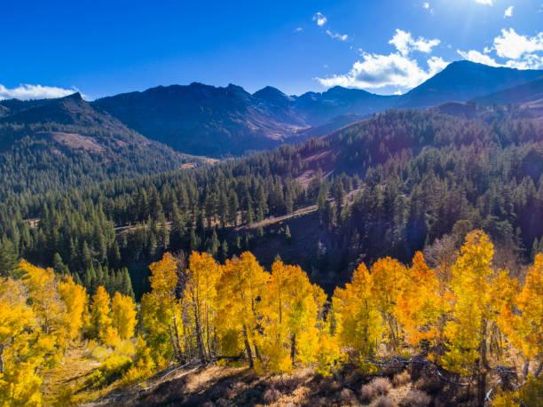 Fall Aspen in Sierra Nevada Mountains.
