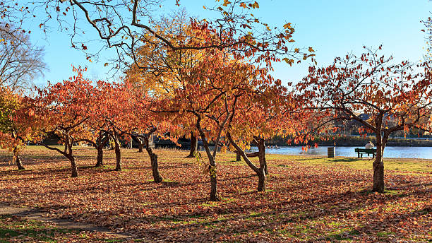 Fall at the Charles River stock photo