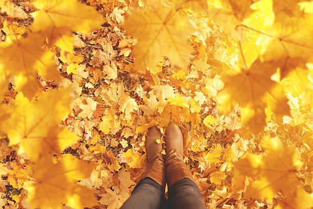 가을맞이, 추절, 채소, 레그스 및 신발도. 개념도 레그스 스톡 사진