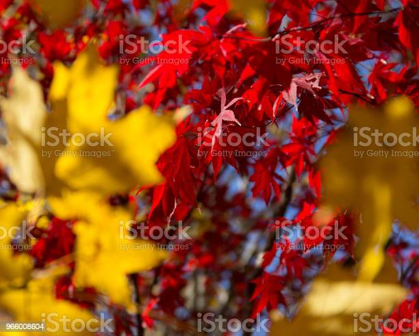 A Fall Backdrop Of Red And Gold Leaves On A Sunny Day In The Park - Fotografias de stock e mais imagens de Abstrato