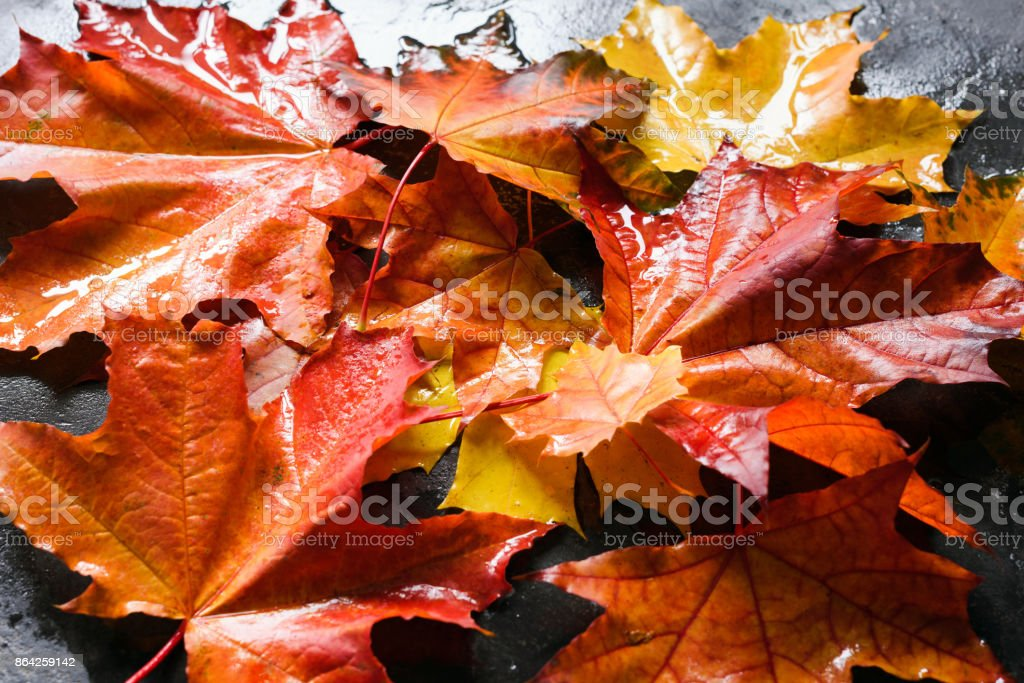 Fall background with colorful maple leaves royalty-free stock photo