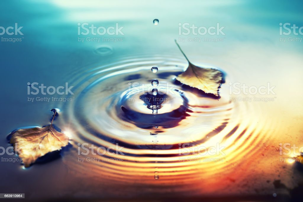 Fall background with dry birch leaves floating on water surface stock photo