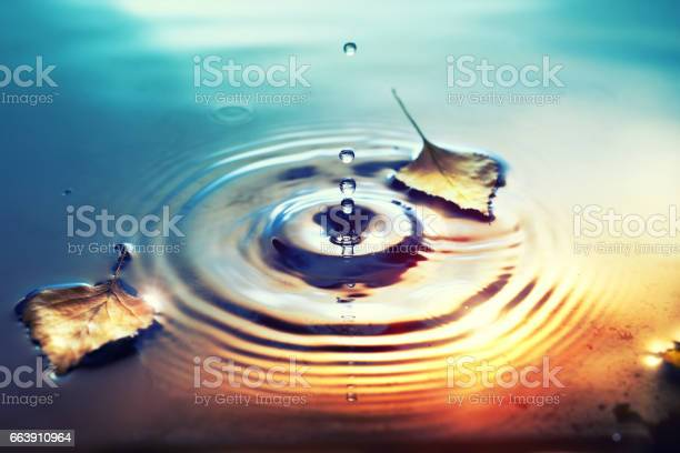 Photo of Fall background with dry birch leaves floating on water surface
