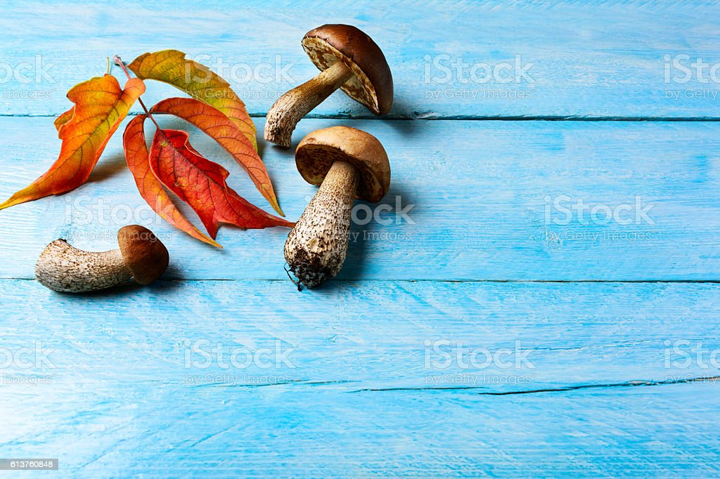 Fall background with forest picking mushrooms and fall leaves stock photo