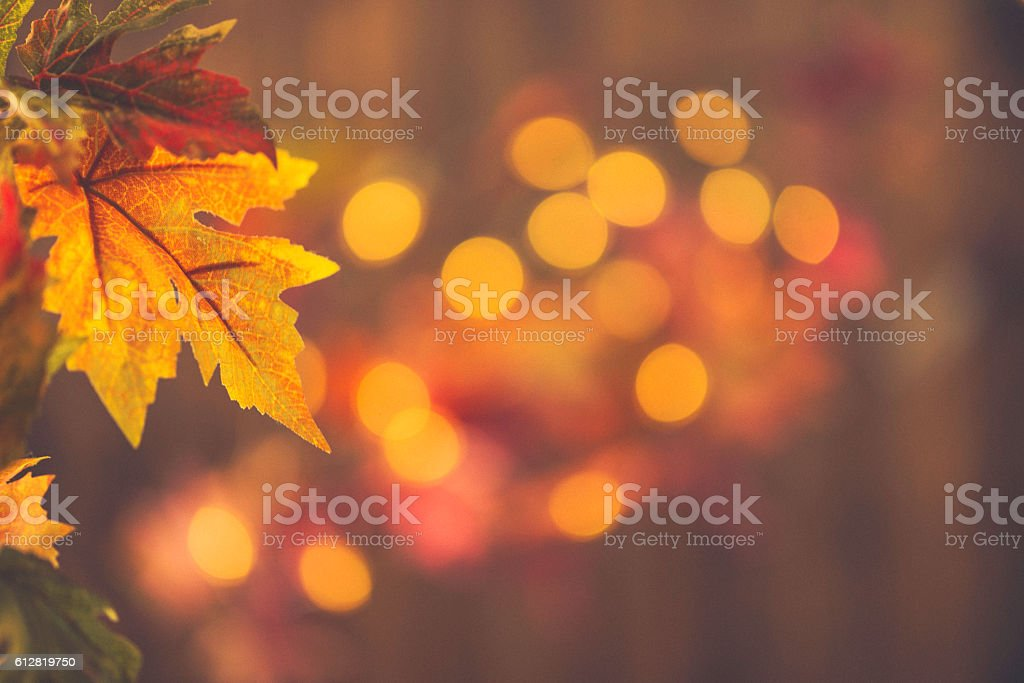 Fall backgrounds. Rustic still life with leaves and bokeh stock photo