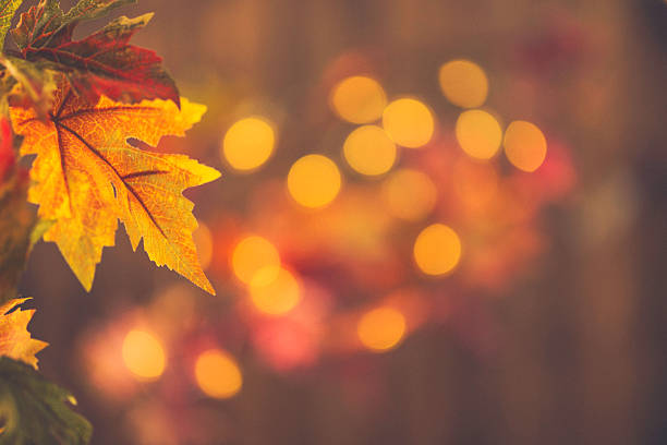 Fall backgrounds. Rustic still life with leaves and bokeh - foto de stock