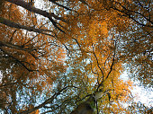 Mystical autumn forest.
