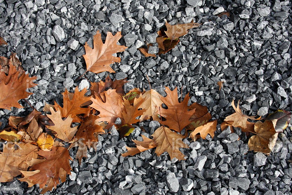 Fall Brown Oak Leaves Scattered On Gray Stones royalty-free stock photo