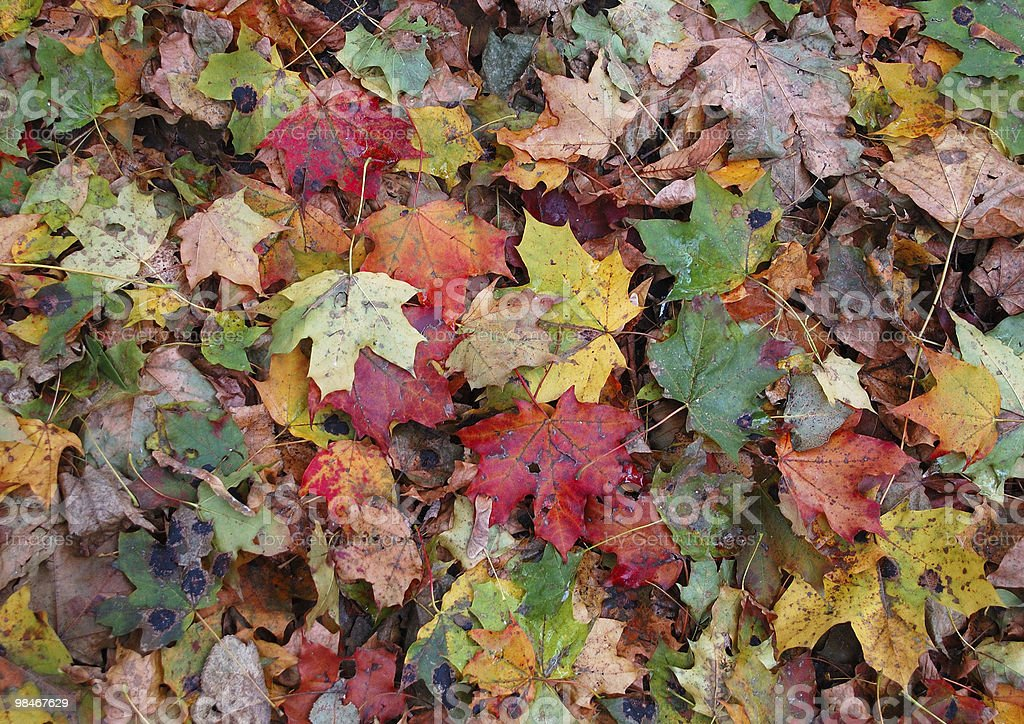 Autunno tappeto foto stock royalty-free
