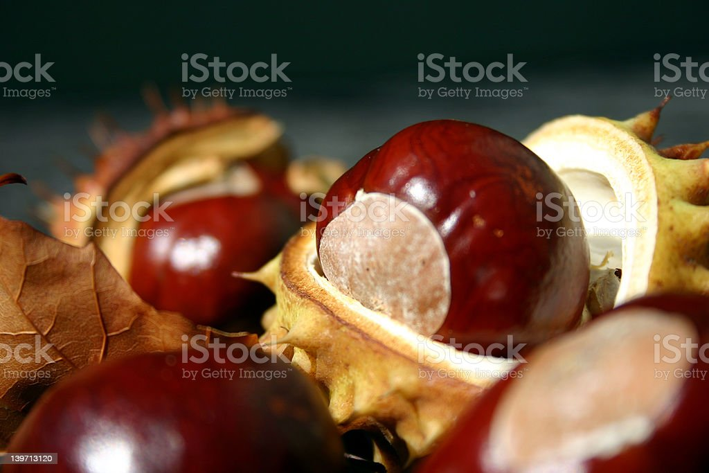 Fall Chestnuts stock photo