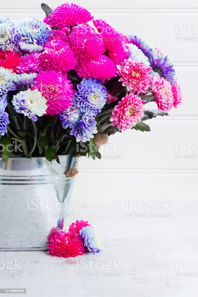 fall chrysanthemum flowers stock photo