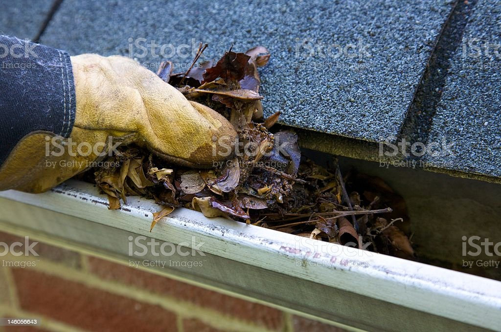 Fall Cleanup - Leaves in Gutter (XL) stock photo