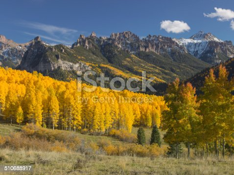 Aspens in full fall colour high in the Rocky Mountains of Colorado, USA