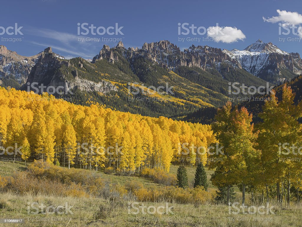 Fall Color aspens in the Rocky Mountains stock photo