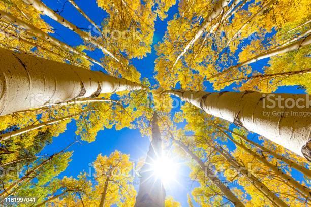 Photo of Fall color fall foliage autumn