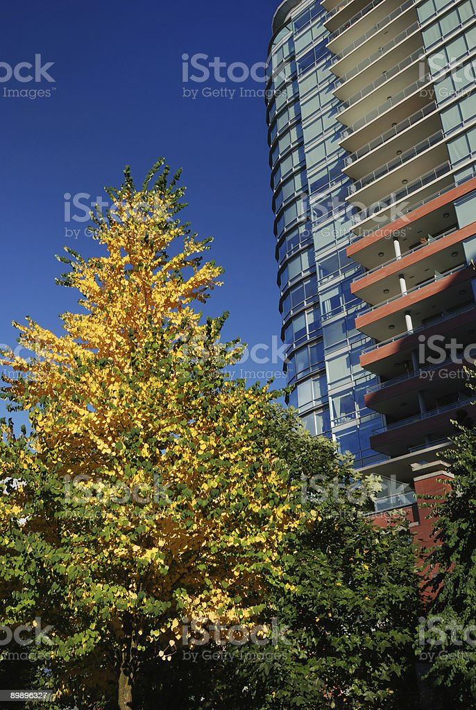 fall color in city royalty-free stock photo