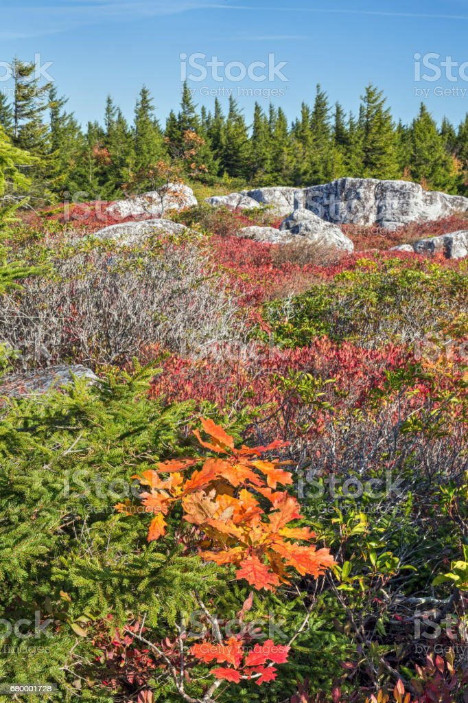Fall Color in The Dolly Sods stock photo