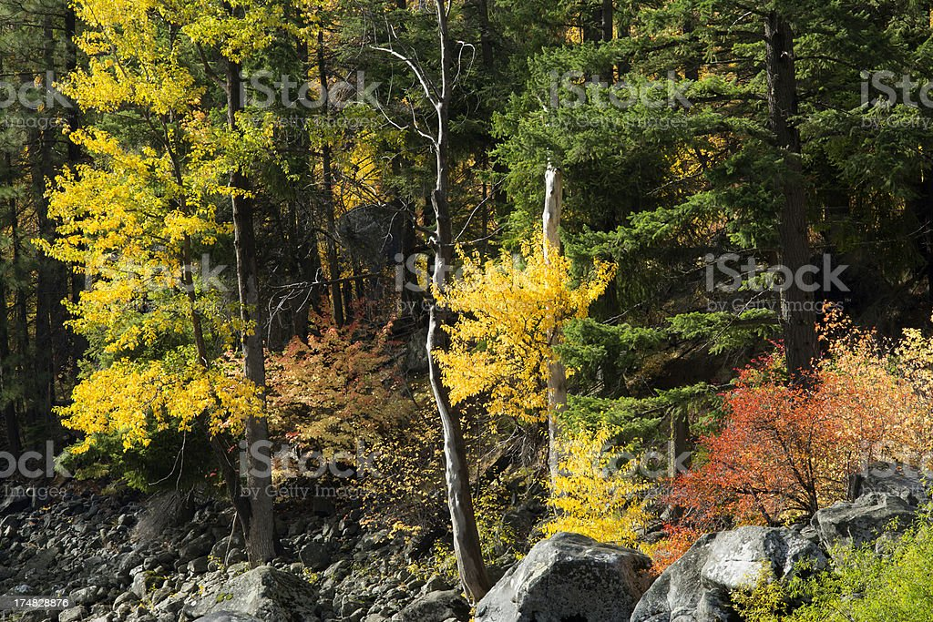 Fall color in Tumwater Canyon stock photo