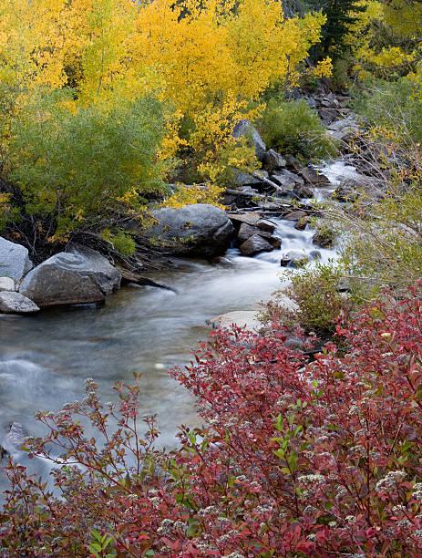 Fall Color on Bishop Creek stock photo