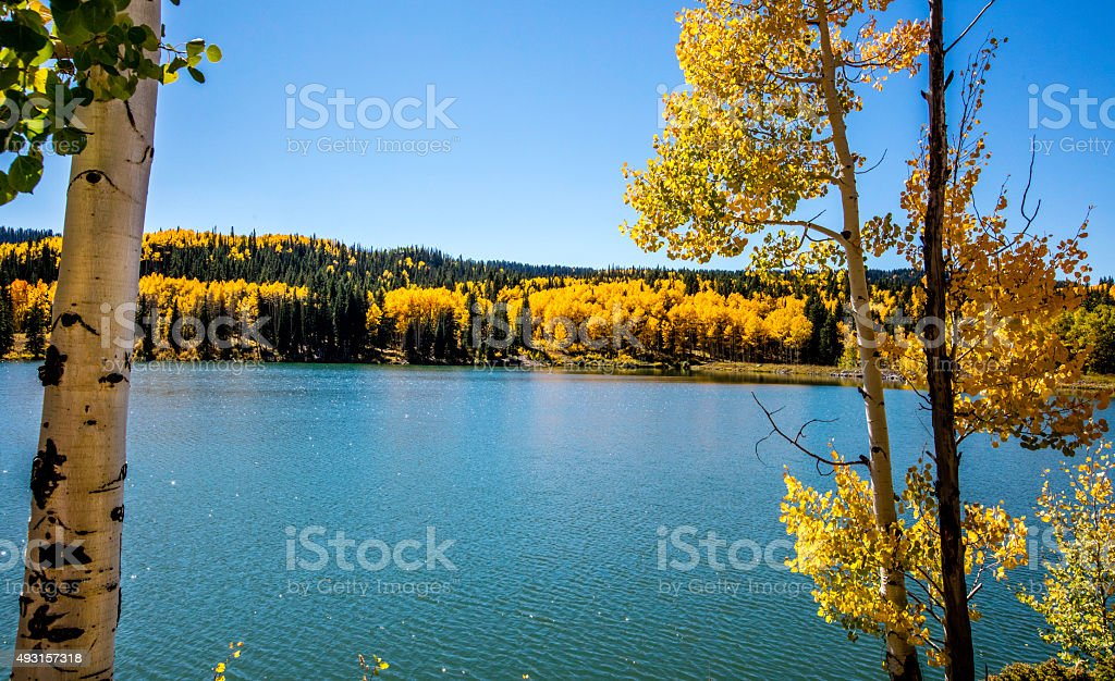 Fall Color stock photo