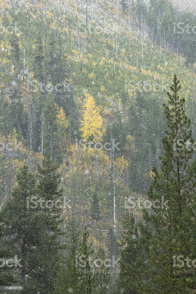 Fall Color Snowfall stock photo