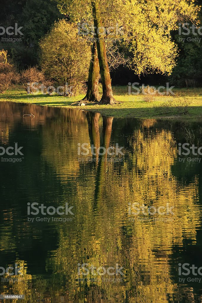 Fall color tree reflected in Crnojevica river, Montenegro stock photo