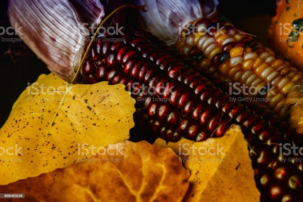 Fall colored corn stock photo