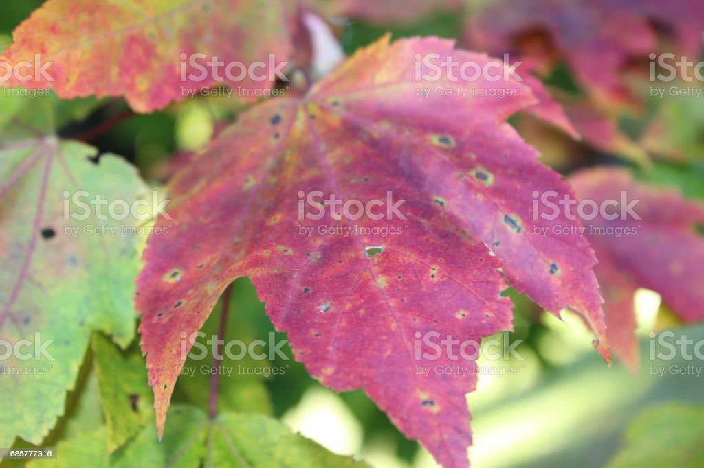 Fall Colors 3 royalty-free stock photo