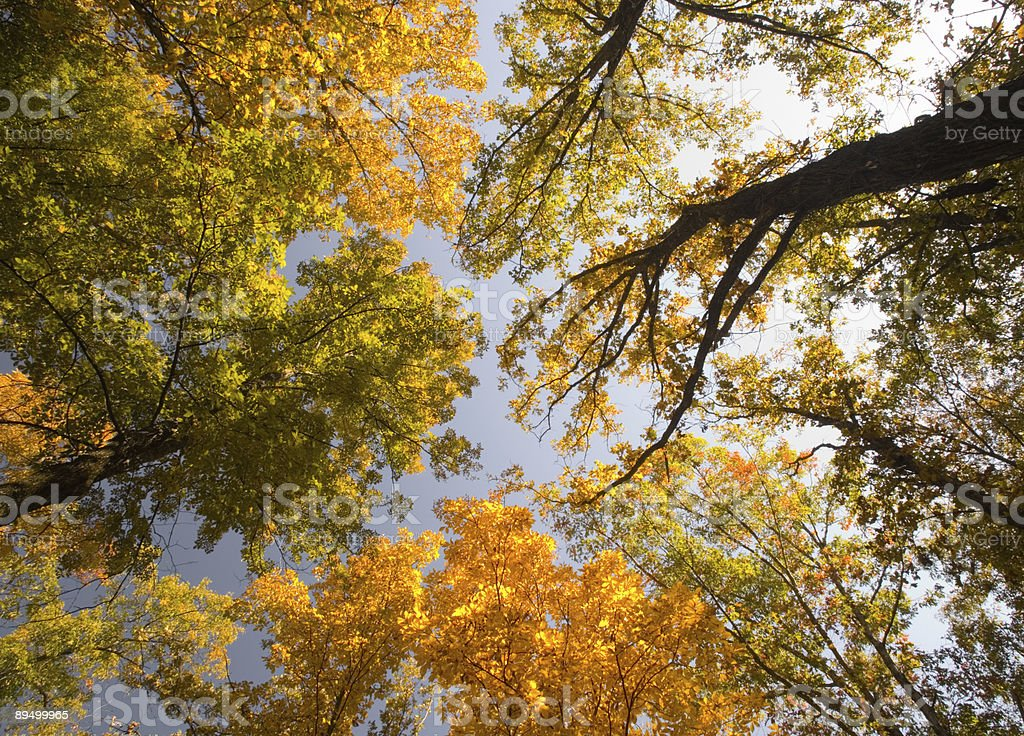 Fall Colors Above royalty free stockfoto