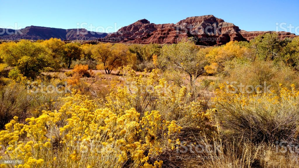 Fall colors along the Virgin River with red rocks of Gooseberry Mesa in the background near Virgin Utah stock photo