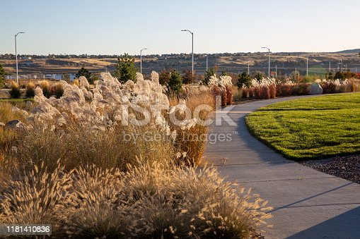 Colors and textures of various types of fall foliage found in the water conserving landscaping installed in a Denver area planned community called Sterling Ranch