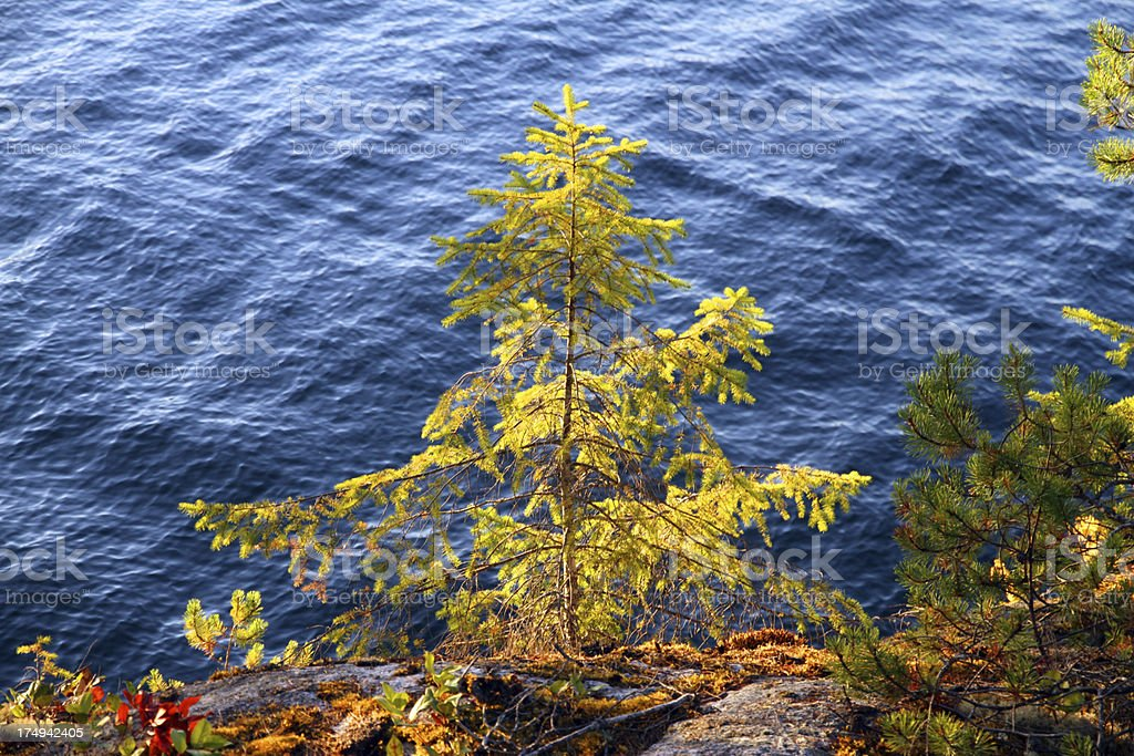 Fall Colors and the Ocean stock photo