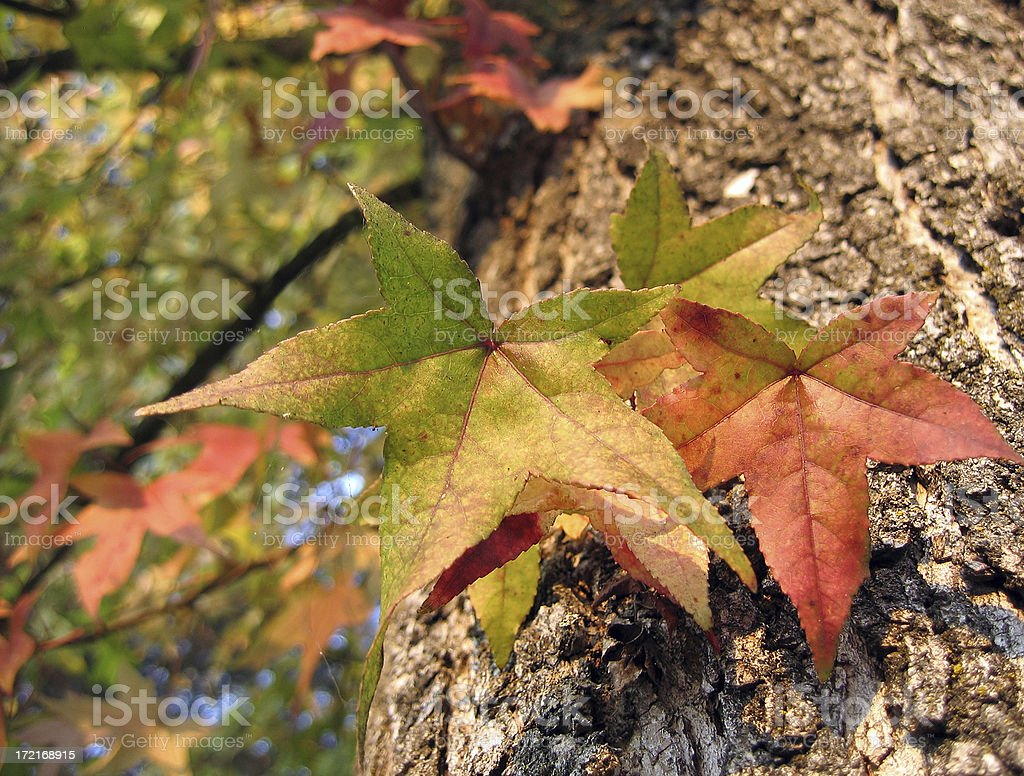 Fall Colors by Three royalty-free stock photo