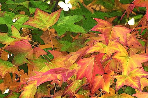 Garden Scene Val Kleuren Closeup Bladeren Stockfoto en meer beelden van Aangelegd