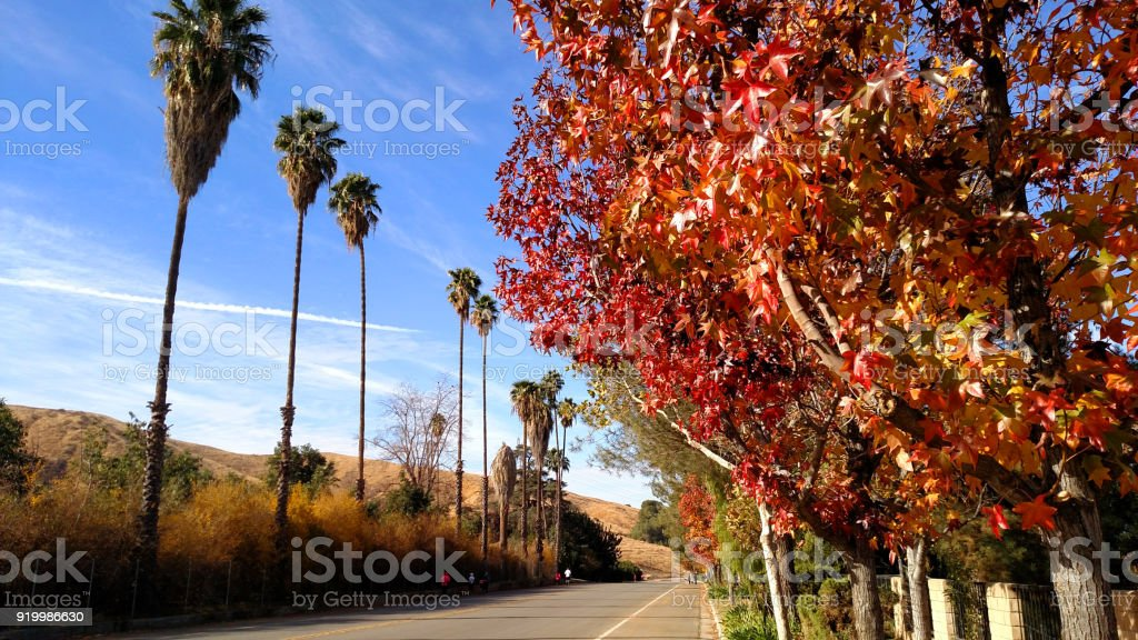 Fall colors in autumn and palm trees along country road in Southern California stock photo