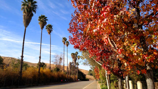 Fall colors in autumn and palm trees along country road in Southern California Fall colors in autumn and palm trees along country road in Southern California redlands california stock pictures, royalty-free photos & images