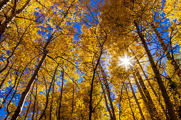 Fall Colors in Colorado Mountains stock photo
