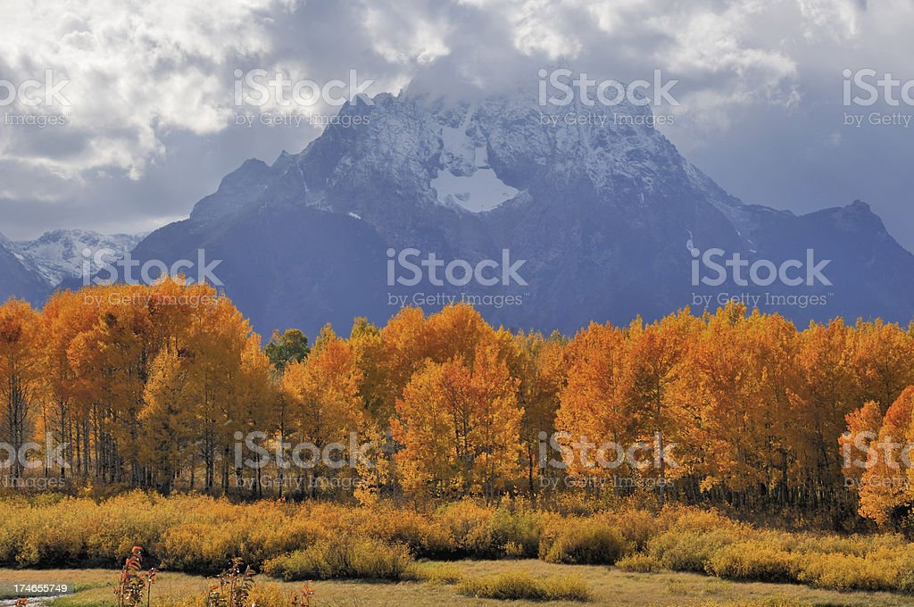 Fall Colors In Grand Teton National Park royalty-free stock photo