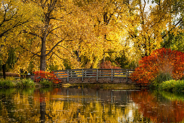 Fall Colors in Outdoor Park stock photo