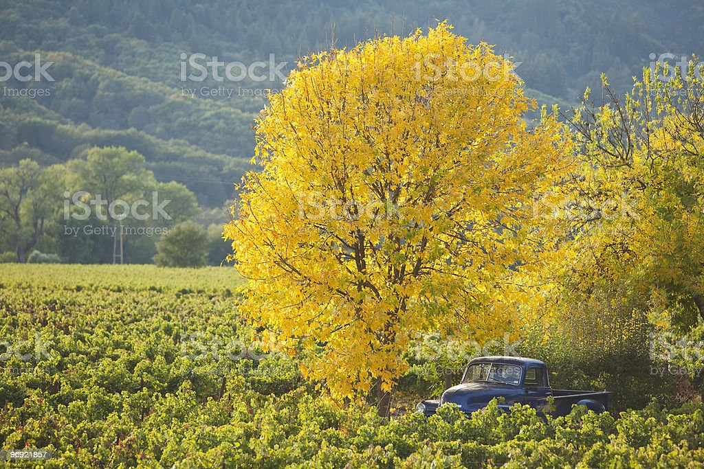 Fall colors in Sonoma county, Northern California royalty-free stock photo