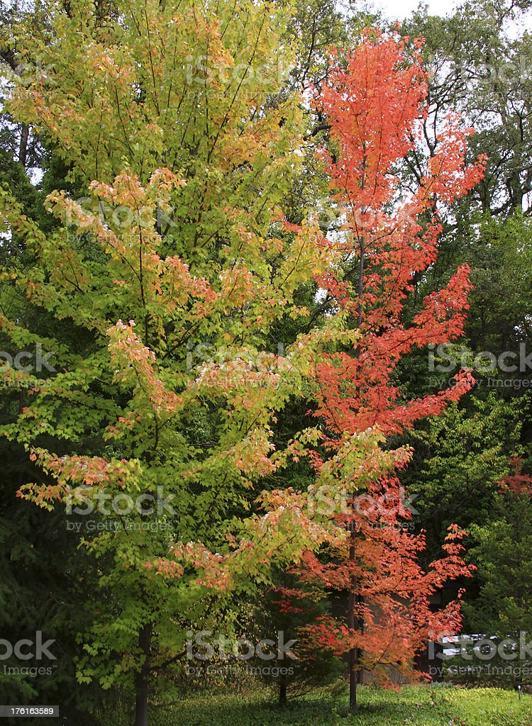 Fall colors in the California foothills royalty-free stock photo