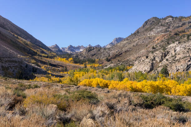 Fall colors in the Eastern Sierra, California stock photo